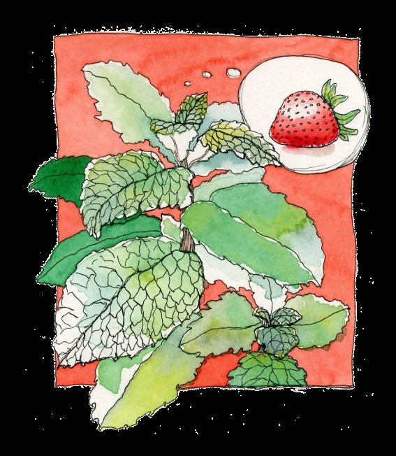 """Erdbeerminze - Illustration zu """"Studentengarten"""" - Ein DIY im Studentenmagazin """"Presstige"""""""